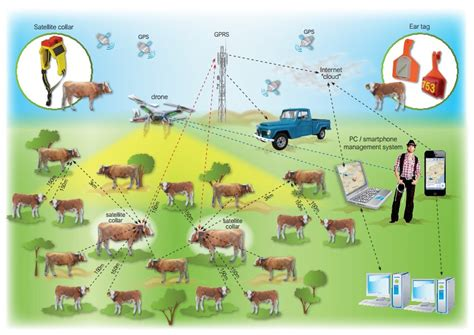 Telefónica Partners With Cattle-watch Providing Iot
