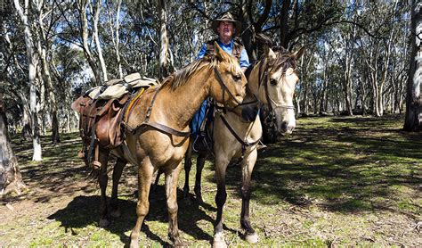 horses wild brumbies brumby snowy country cochrane bush peter australia australian mountains river cull president proposed controversial staunch supporter promises