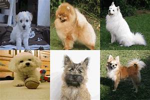 Small Fluffy Dog Breeds List: Including Top 10 & Best Guide