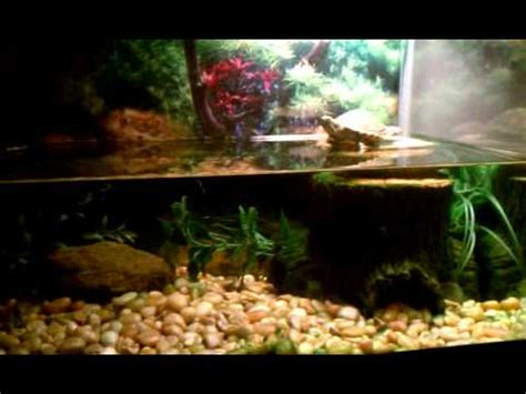 eared slider tank red eared slider turtle update 10 gallon tank youtube