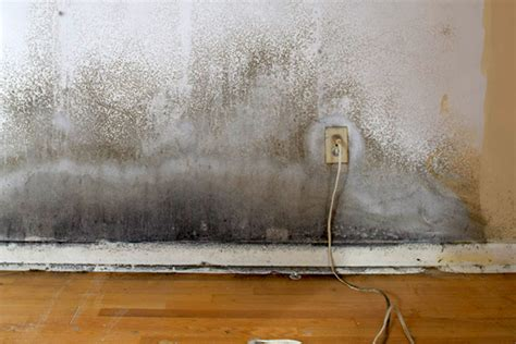 home insurance and mold does homeowner insurance cover