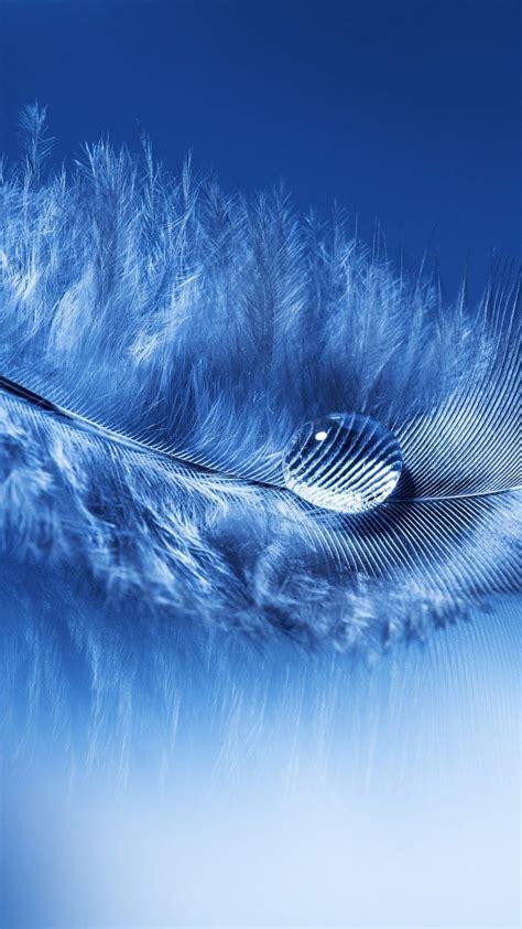 portrait display feathers water drops macro simple