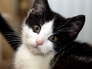 Cute Black And White Cats Pretty Cat Pictures - Litle Pups