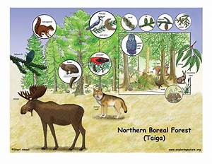 Life In The Taiga : northern boreal forest taiga ~ Frokenaadalensverden.com Haus und Dekorationen