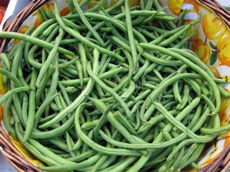 cuisiner les haricots verts frais cuisson des haricots verts frais