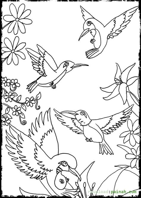 Hummingbird Coloring Pages Flower  Coloring Pages