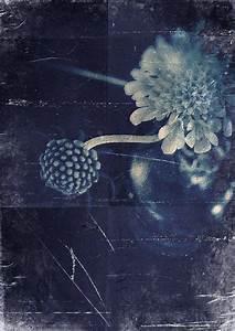 les 58 meilleures images du tableau blue sur pinterest With amazing nuance de couleur peinture 12 tableau de fleur bleues