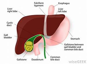 Gallbladder emptying