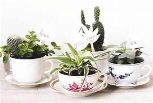 Plante Succulente Espèces Représentatives : faites entrer les plantes dans votre int rieur les confettis ~ Nature-et-papiers.com Idées de Décoration