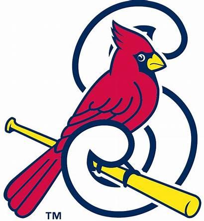 Cardinals Cardinal Louis Baseball St Clipart Clip