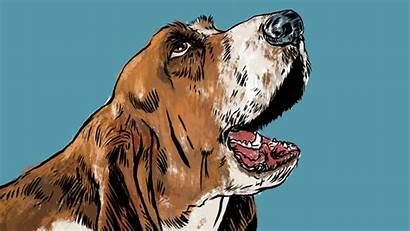 Breathing Heart Gawker Dog Soar Onrushing Roaming
