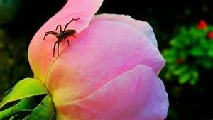 Spinnen Fernhalten Wohnung : spinnen aus der wohnung vertreiben frag mutti ~ Whattoseeinmadrid.com Haus und Dekorationen