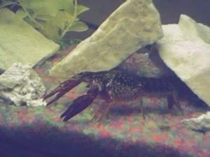 Tropical Fish Centre Exee s Aquarium s
