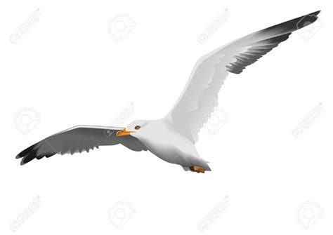 Seagull Clipart Seagull Clipart 8006 Free Clipart Images Clipartwork