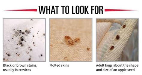 Bedbug Prevention