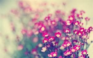 Blumen 1920x1200 Hintergrundbild Hintergrundbilder