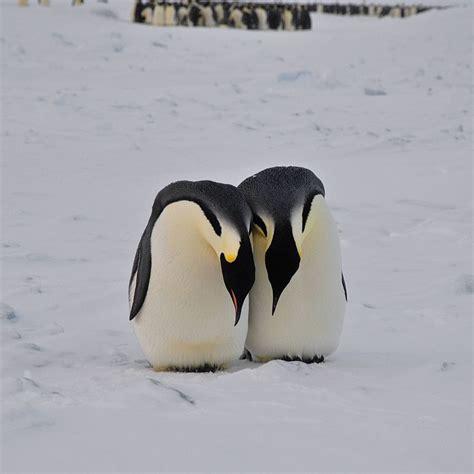 Emperor Penguin Habitat
