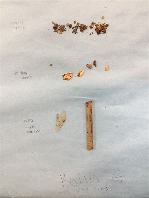 Plastics Revealed In Bolus Dissection Crescenta Valley