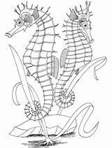 Coloring Ocean Pages Printable Adult Adults Fish Sea Colouring Animals Animal Seahorse Seahorses Realistic Books Horse Sheets Scene Primarygames Bestcoloringpagesforkids sketch template