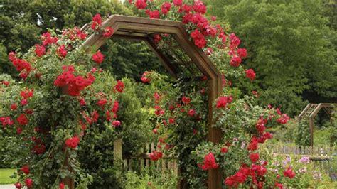 So Finden Sie Die Passende Rosensorte by Rankhilfen F 252 R Kletterrosen Darauf Kommt Es An