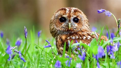 Grey Animal Wallpaper - grey owl plants flowers owls animal wallpaper