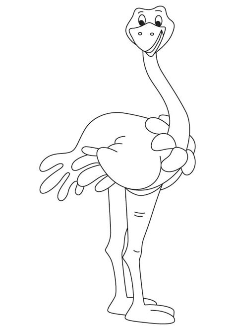 somali ostrich coloring page   somali