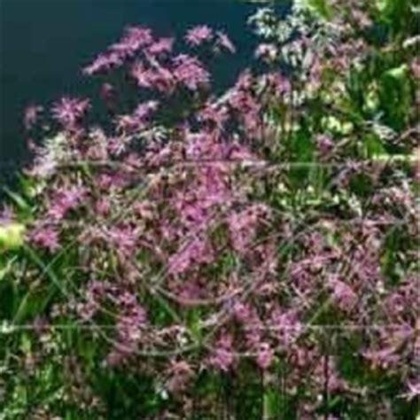 wanneer krijgt een sering bloemen zeepplanten kweek je eigen zeep in de tuin of op het