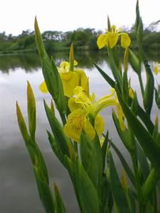 Plantes Aquatiques Pratiquefr