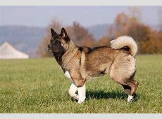 Große Hunderassen – Bilder von XXLHunden
