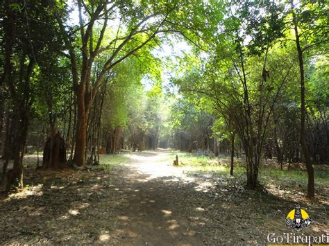 eco forest mamandur eco forest trails trekking location direction map