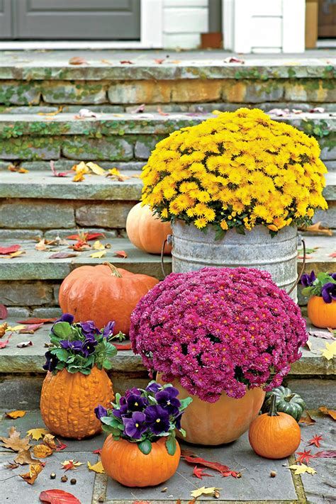 6 Things You Didn't Know About Mums - Southern Living