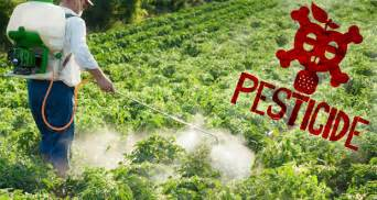 Pesticides and Cancer  The    Love Affair    Continues  Pesticides And Herbicides