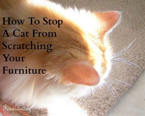 ideas  cat scratch furniture  pinterest cat