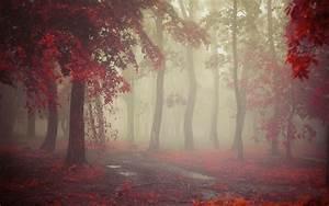 Wallpaper, Sunlight, Trees, Landscape, Forest, Fall, Leaves, Nature, Red, Rain, Morning, Mist