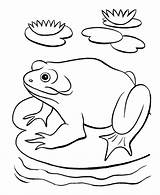 Pond Coloring Frog Habitat Printable Template Ausmalbilder Animals Sheet Fish Sketch Kategorien Aehnliche Popular sketch template