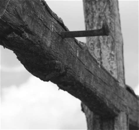 Image result for the cruel tree of calvary