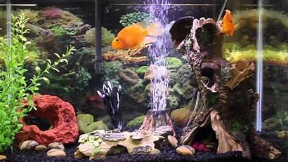 Aquarium Screensaver Pc Wallpapers Windows Fish Tank
