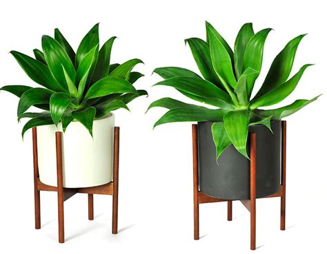 Case Study® Cylinder Planter With Wood Stand   hivemodern.com