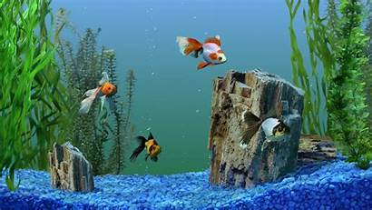 Aquarium Hi Res Wallpapers Pixelstalk