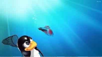 Windows Linux Vs Wallpapers Wallpapersafari Code Desktop