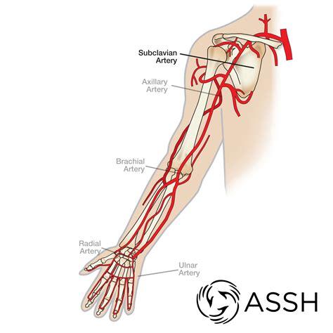 Diagram Of Arm Vessel diagram of arm vessels wiring diagrams list