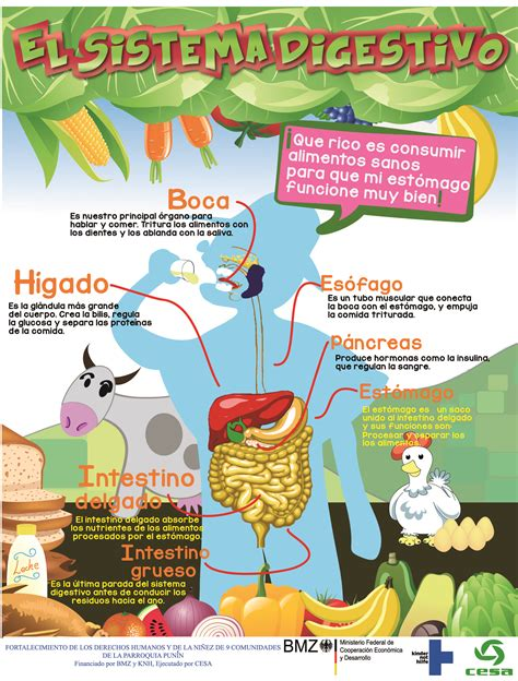 Sistema Digestivo  C Nat  Pinterest  Natural, Ciencia