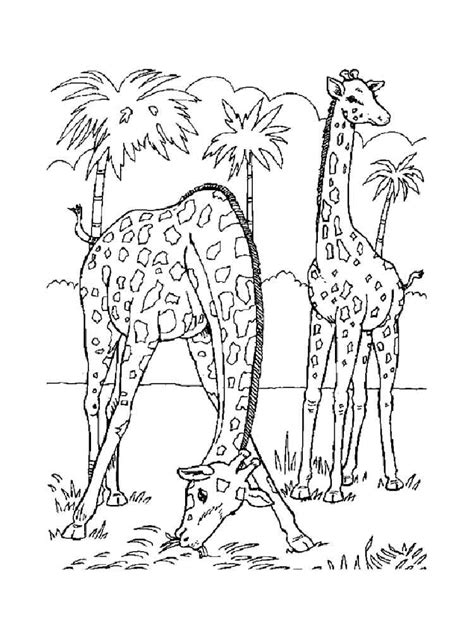 giraffe coloring pages   print giraffe coloring pages