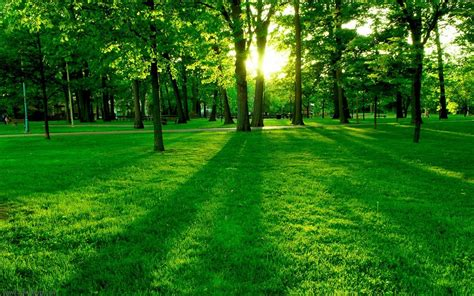 top 22 awesome amazing and beautiful greenery wallpapers in hd