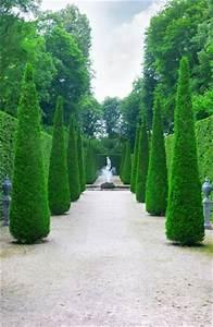 Fuchsien Stecklinge Kaufen : zypressen baum pflanzen pflege schneiden ~ Michelbontemps.com Haus und Dekorationen