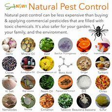 Natural Pest Control Methods
