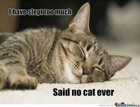 Sleeping Cat Meme - cats love sleeping by cincy meme center