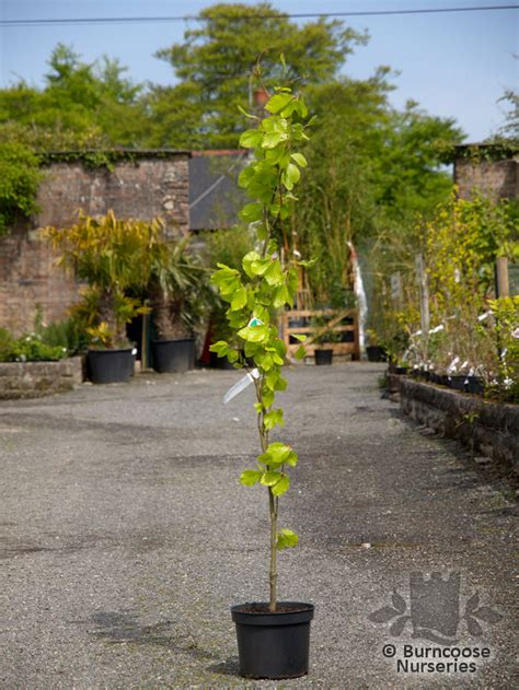 destinations by andrew seahorse l 16 scottish plant nurseries abriachan nurseries the