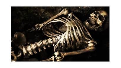 Bones Skeleton Skull Wallpapers Mobile Desktop