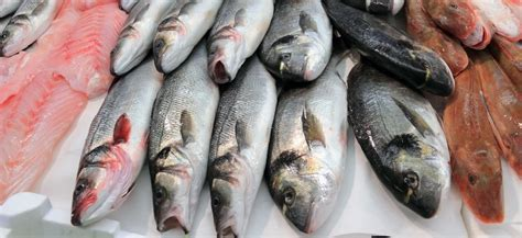 fish safe  eat  fukushima